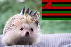 May be an image of hedgehog and text